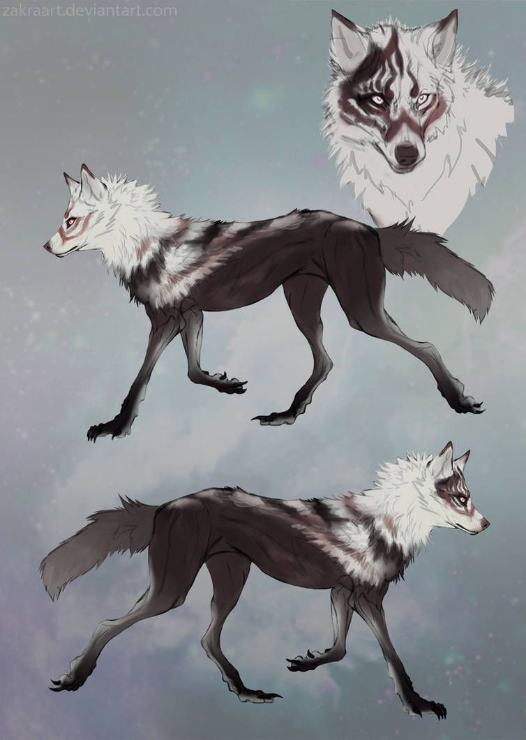 Photo of Wolf Drawing by Zakraart. Master of wolfs – ARTWOONZ