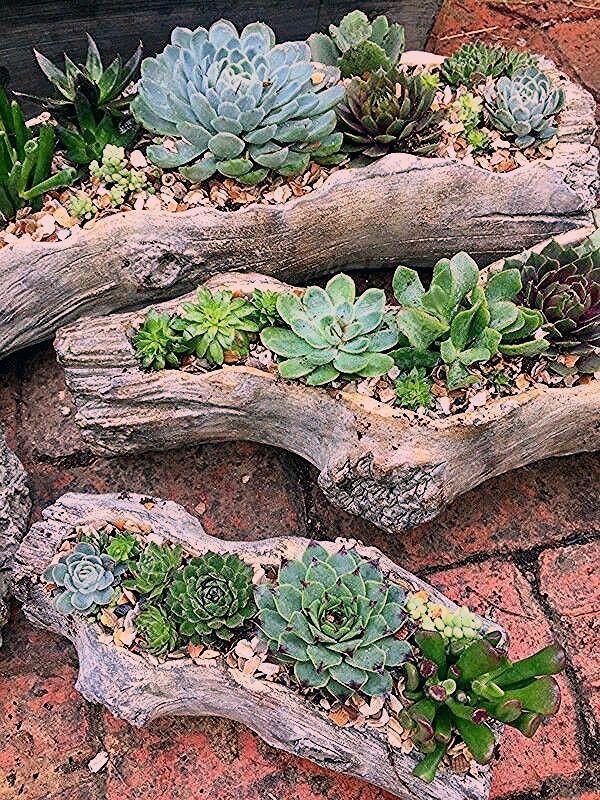 Photo of Deko – Pflanzen ideen