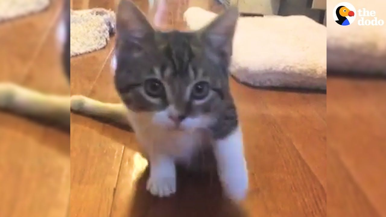 Injured Kitten S Big Brother Shows Her How To Be Strong Big Brother Show Kittens Cats And Kittens