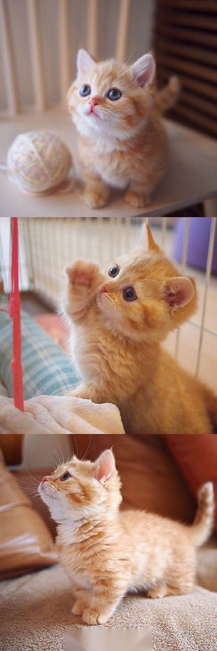 Cutebabyanimalskittens Kittens Cutest Cute Cats Cute Baby Animals