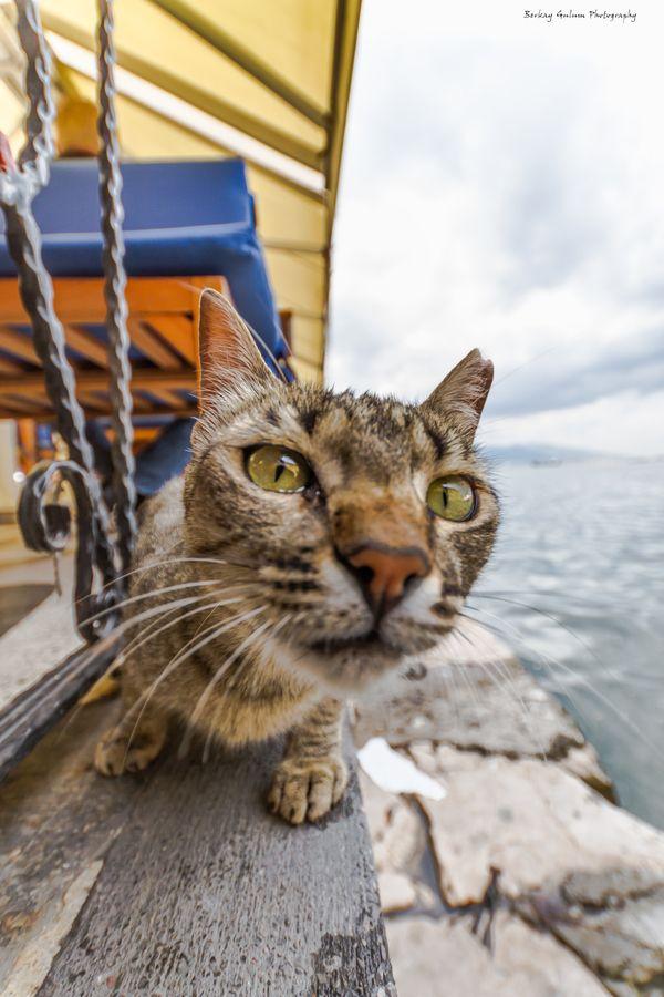 Notched Ear Cat Tnr Trap Neuter Return A Feral Cat Population