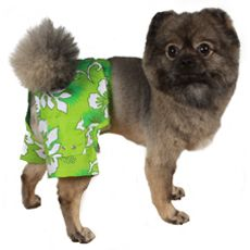 Pooch Outfitters Cancun Dog Swim Trunks Pet Costumes Dog Wear Dogs