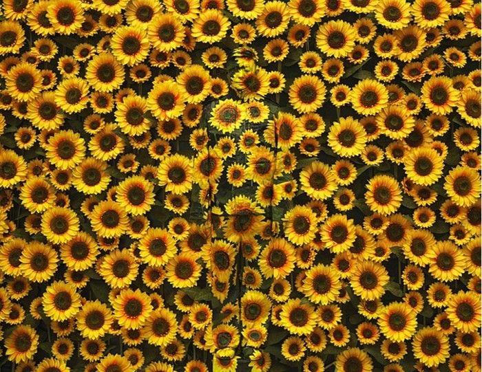 Liu Bolin, Hiding in the City - Sunflower, 2012