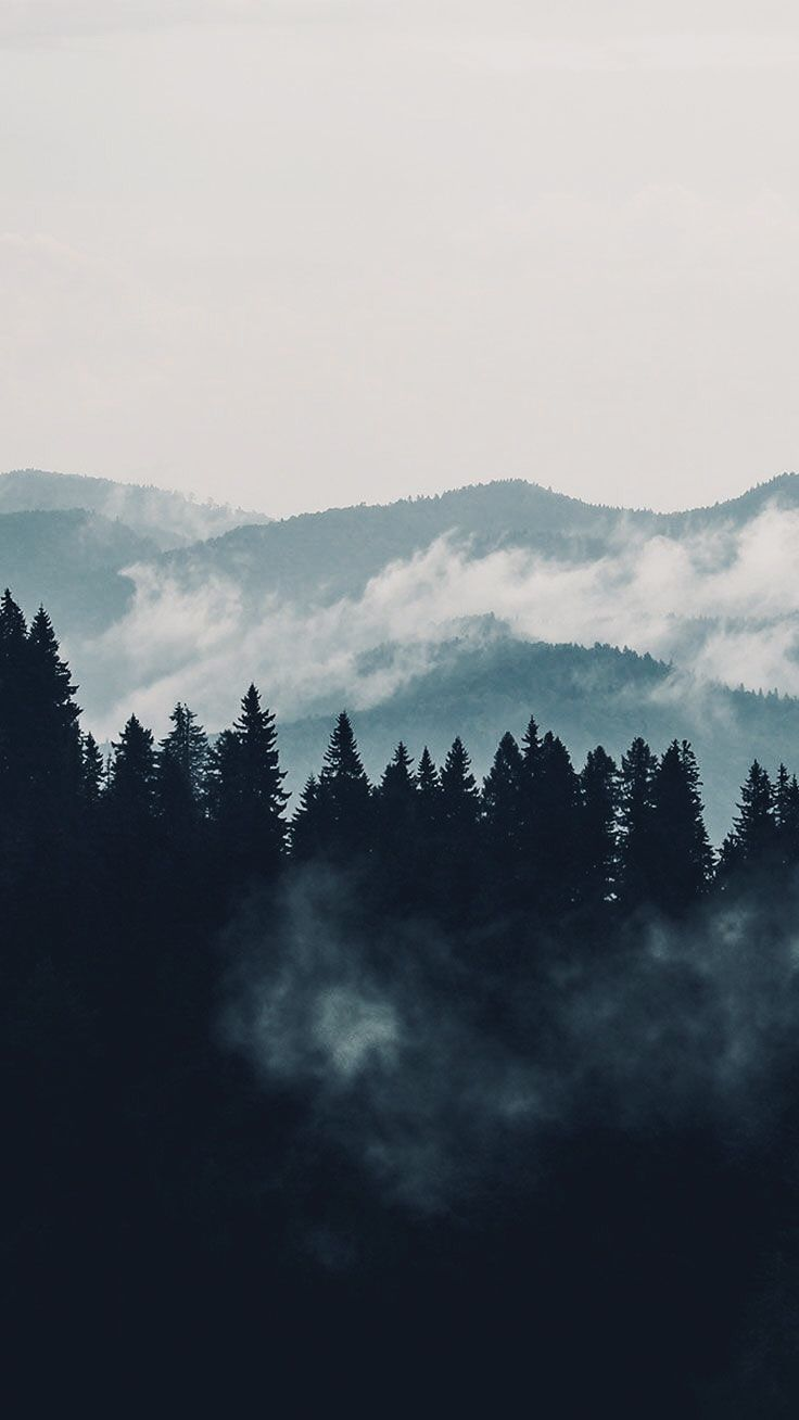 dark aesthetic forest wallpaper