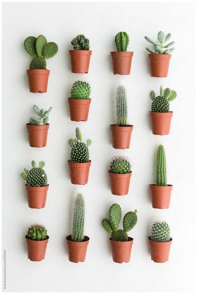 40 The Best Indoor Plants That Don T Need Sunlight You 400 x 300