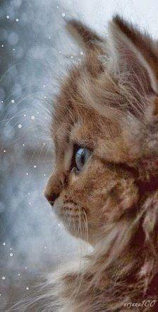 Photo of Katzen Hintergrund Iphone Kitty 23+ Beste Ideen #cats animal background iphone Katzen …