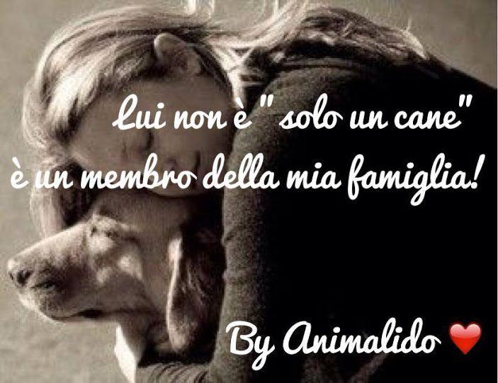 Il Mio Cane è La Persona Migliore Di Tutta La Mia Famiglia Solo Lui