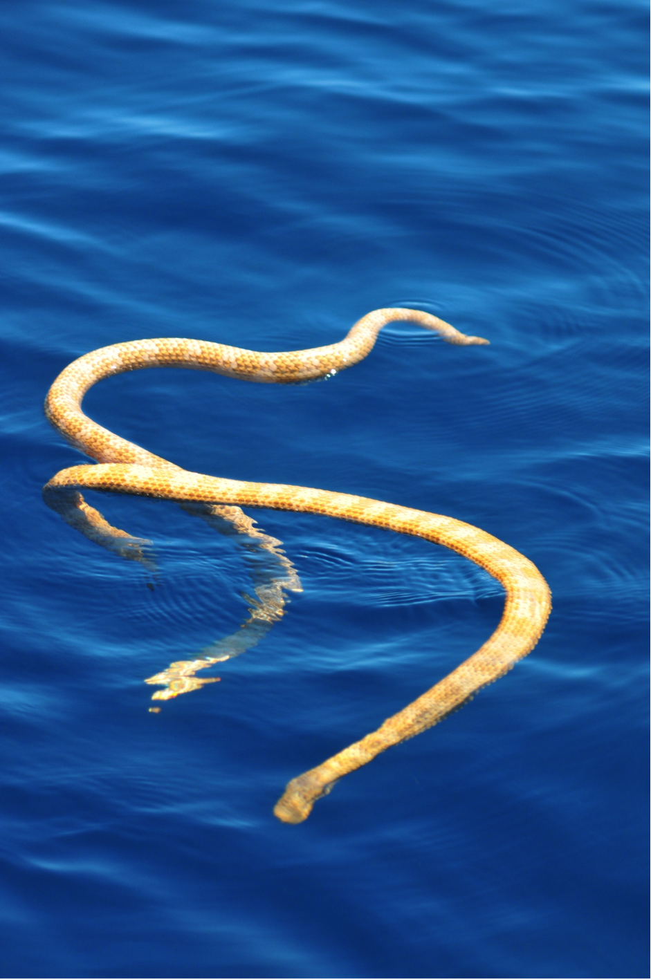 sea snake or you know you can run away from one that stripped