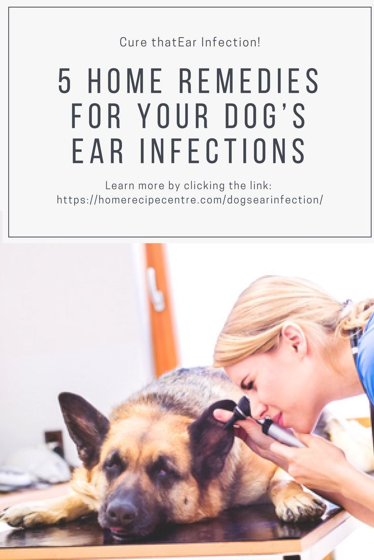 5 Home Remedies For Your Dog S Ear Infection Dogs Ears Infection