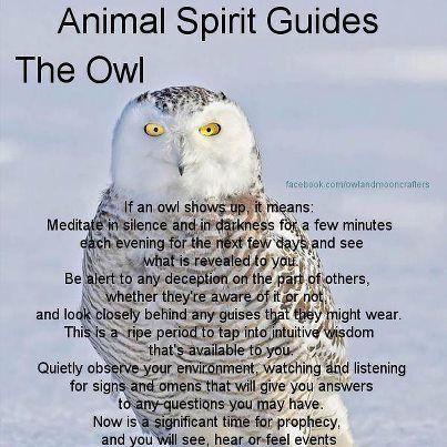 Owl Spirit Guide New Age Pinterest
