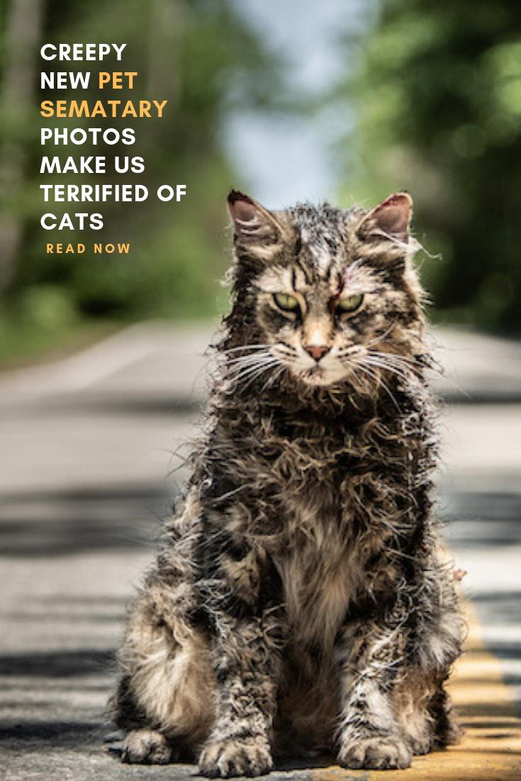 Creepy New Pet Sematary Photos Make Us Terrified Of Cats