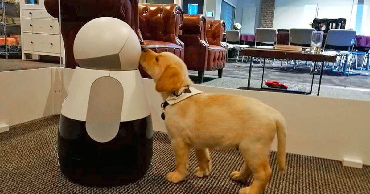 Kuri home robot can tell your pets from people What's