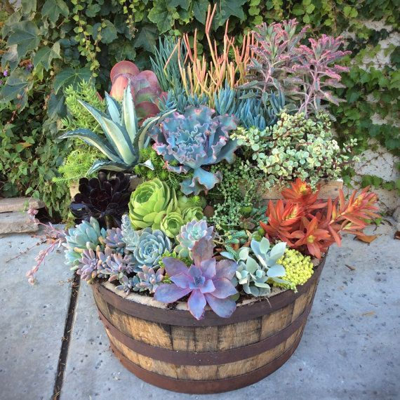 Image Result For Best Plants For A Wine Barrel Winebarrel