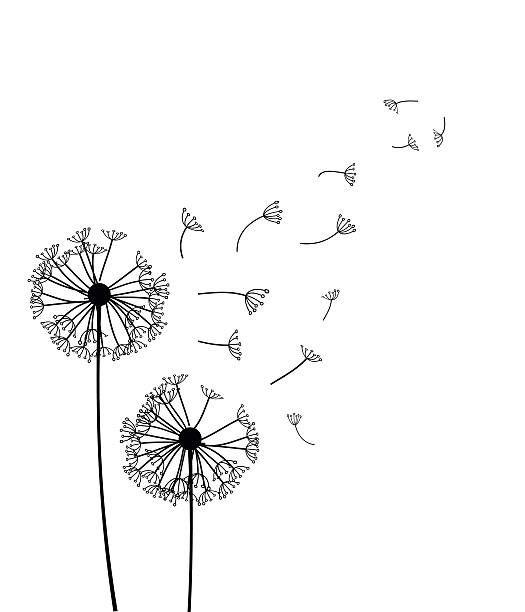 Dandelion Illustrations, Royalty-Free Vector Graphics & Clip Art