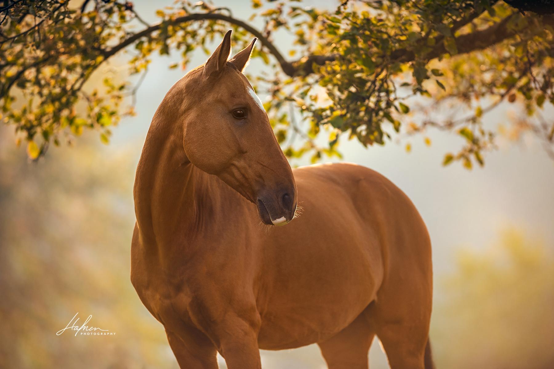 Pin Von Anna Marie Auf Equine Photography In 2020 Pferde Fotografie Pferdefotografie Pferdefotos