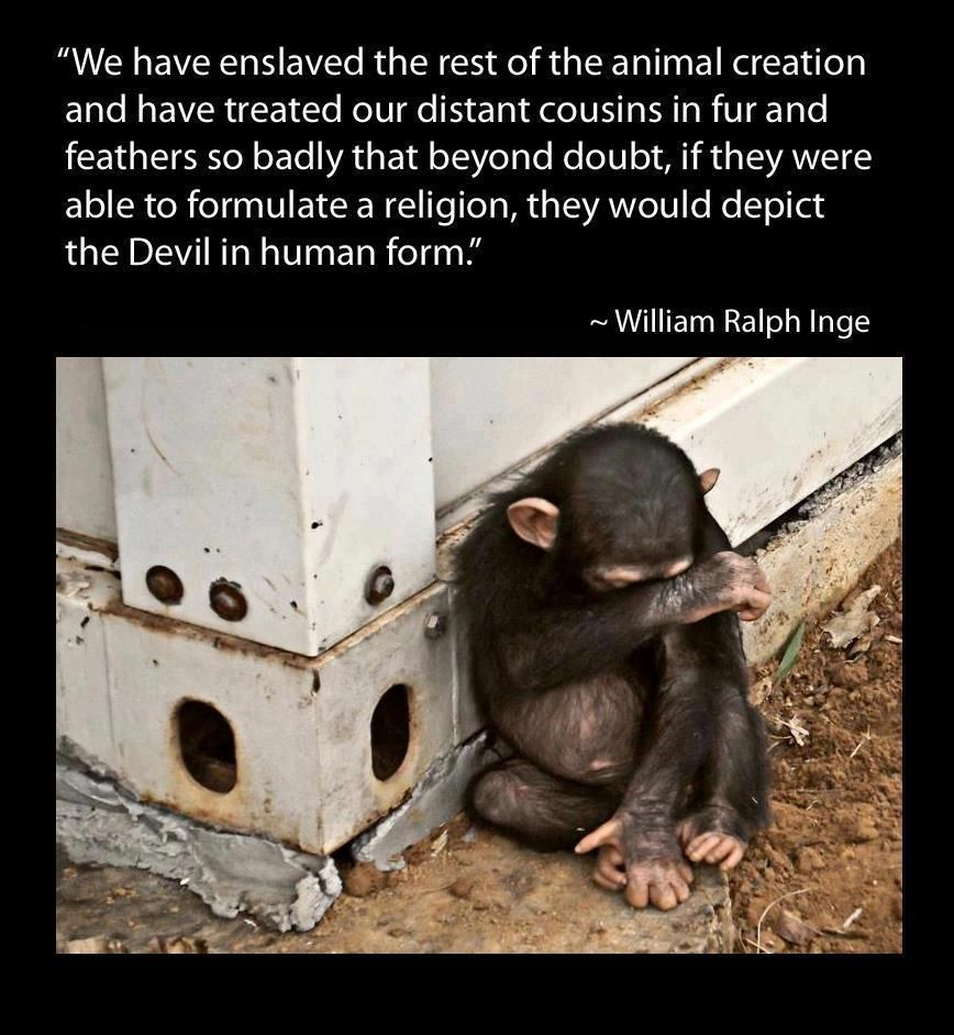 Humans Evil Verdad Denuncia Animals Animal Quotes Animal Rights