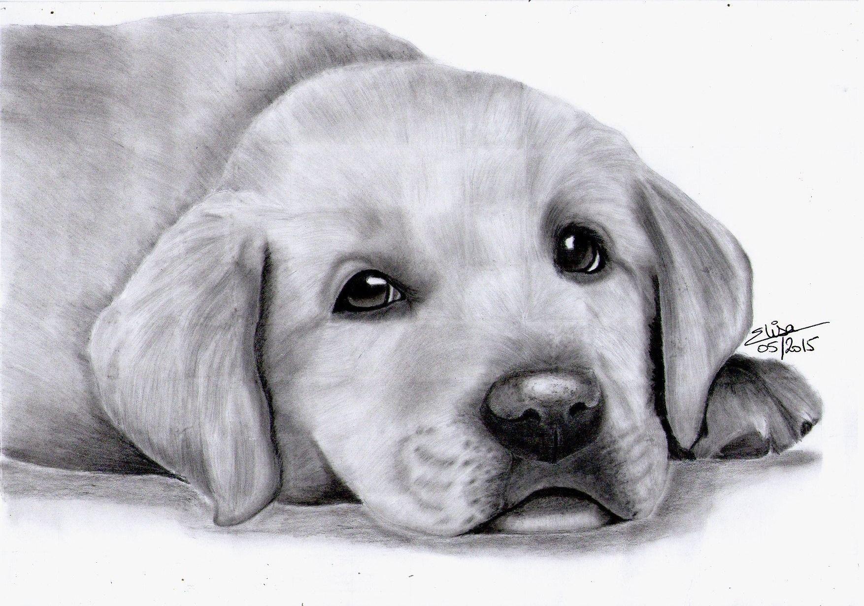 Portrait Dessine D Un Adorable Chiot Labrador Dessins Par