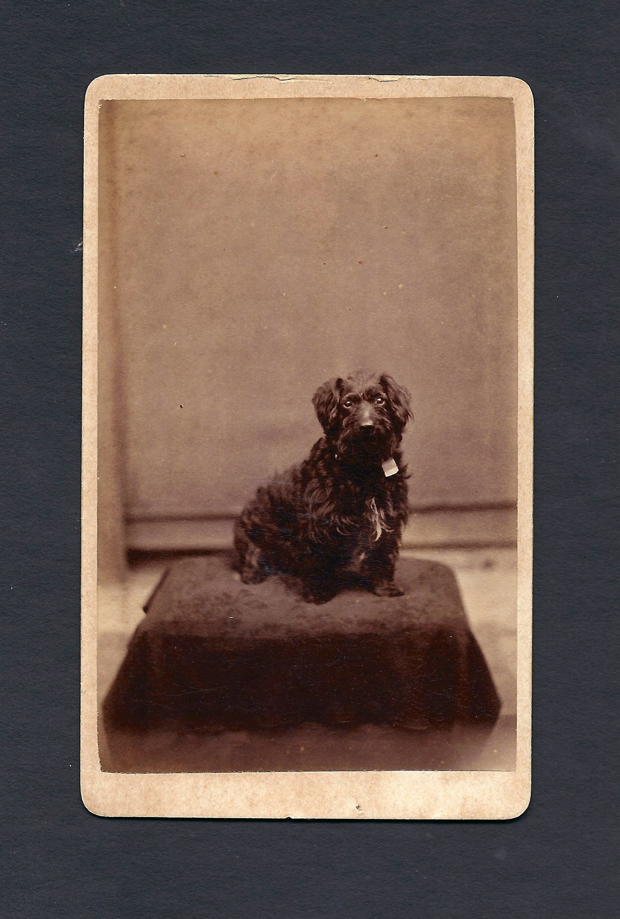 Ziggy Was Photographed In 1889 By H B Upton Of Crystal Lodge