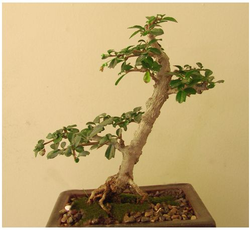 fukien tea | Flickr : partage de photos !