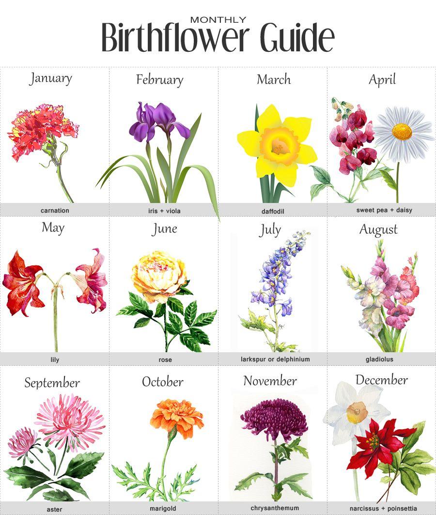 Birth Flowers chart Birth flowers, Birth month flowers