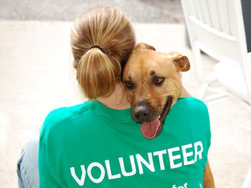 Animal Shelter Volunteers Become One Today Animal Shelter Volunteering With Animals Volunteer