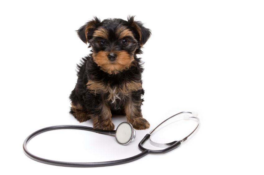 14+ Agoura hills animal hospital ideas