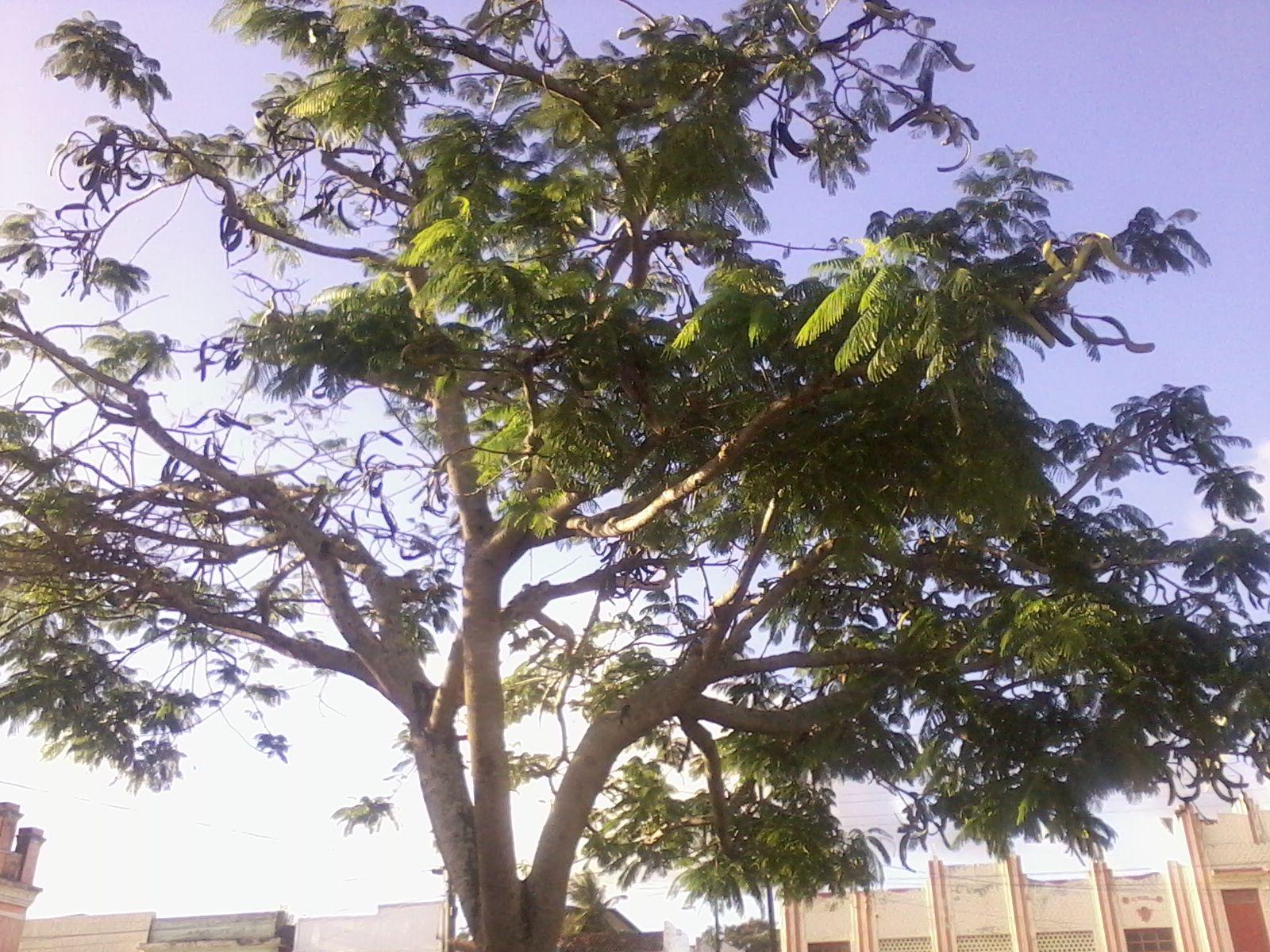 A natureza em sua plenitude!!
