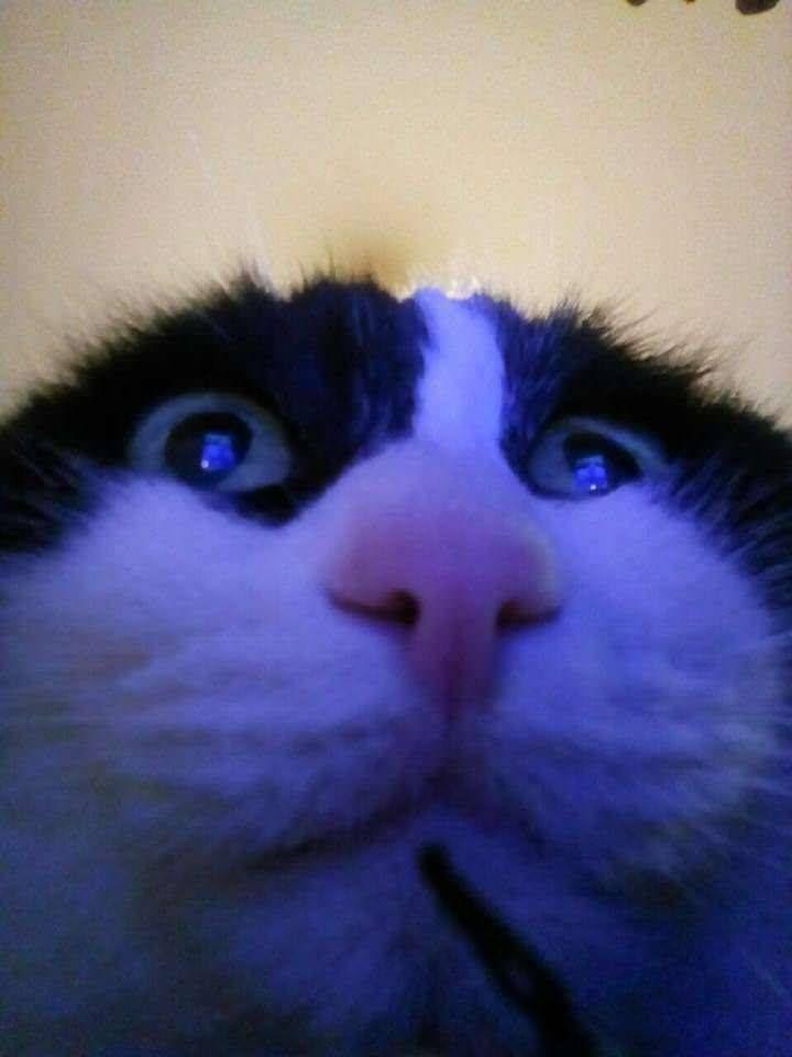 Meme Dump And Pick My Xbox Gamerpic Album On Imgur Cat Lovers Cute Cats Memes