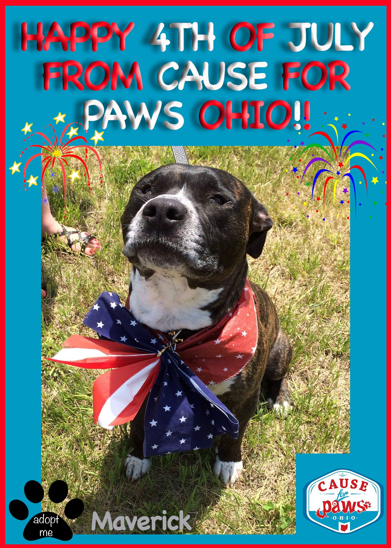 Happy 4th Of July From Cause For Paws Ohio Causeforpawsohio Com Happy 4 Of July Paw 4th Of July