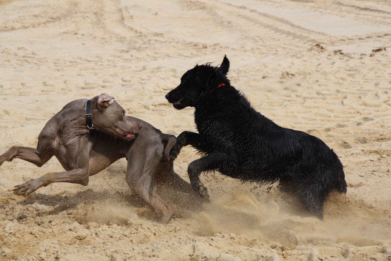 Lucy und Gerry Pawshake (mit Bildern) Hunde