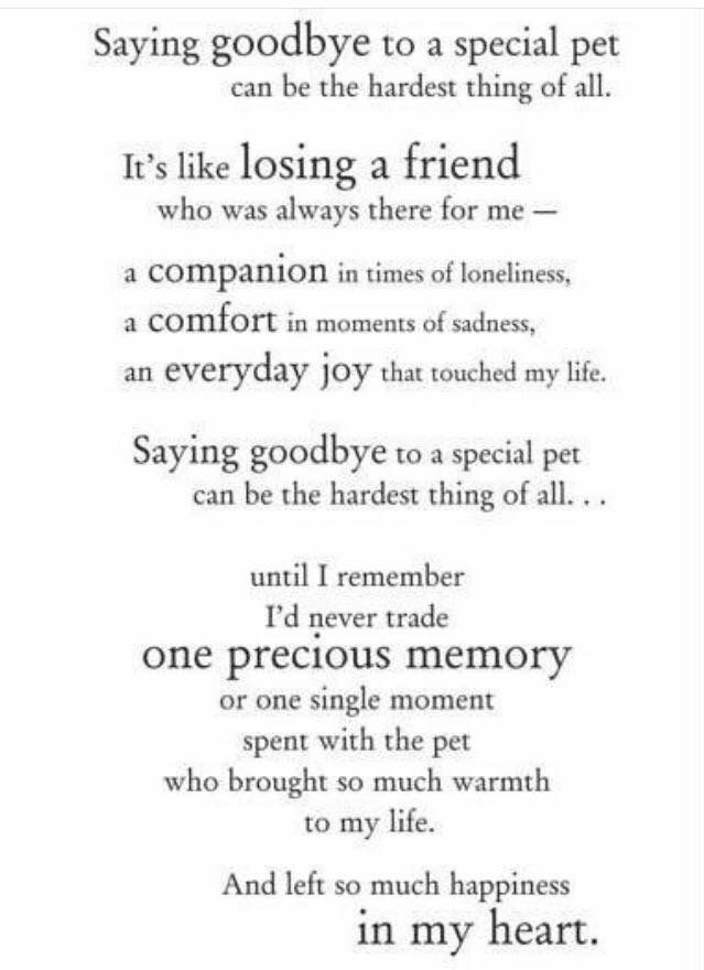 Pin By Jules Estrada On Dogs Pet Poems Dog Quotes Pet Loss Grief