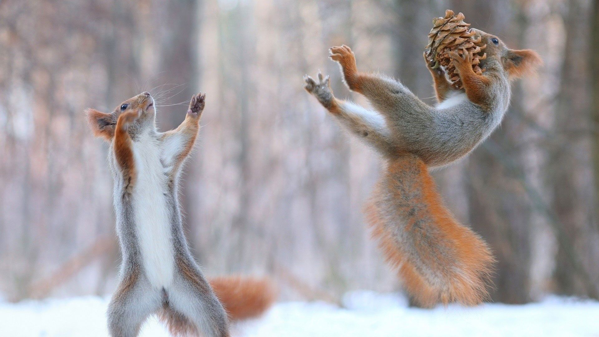 hd pics photos stunning attractive squirrel funny pair best close ...