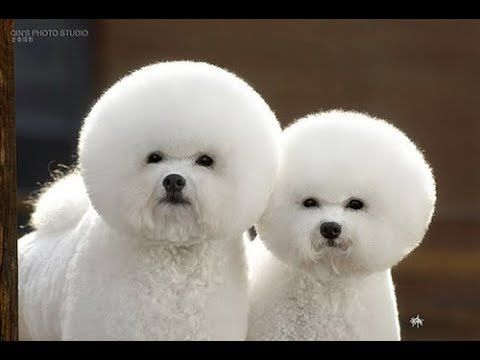 Cutes dogs | Cutest dog in the world | Cute dogs clips ...