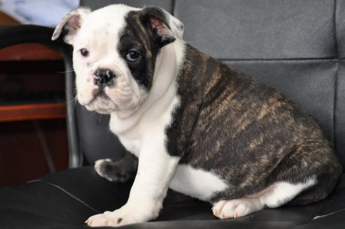 Pets And Animals For Sale In Mississauga Ontario Classifieds