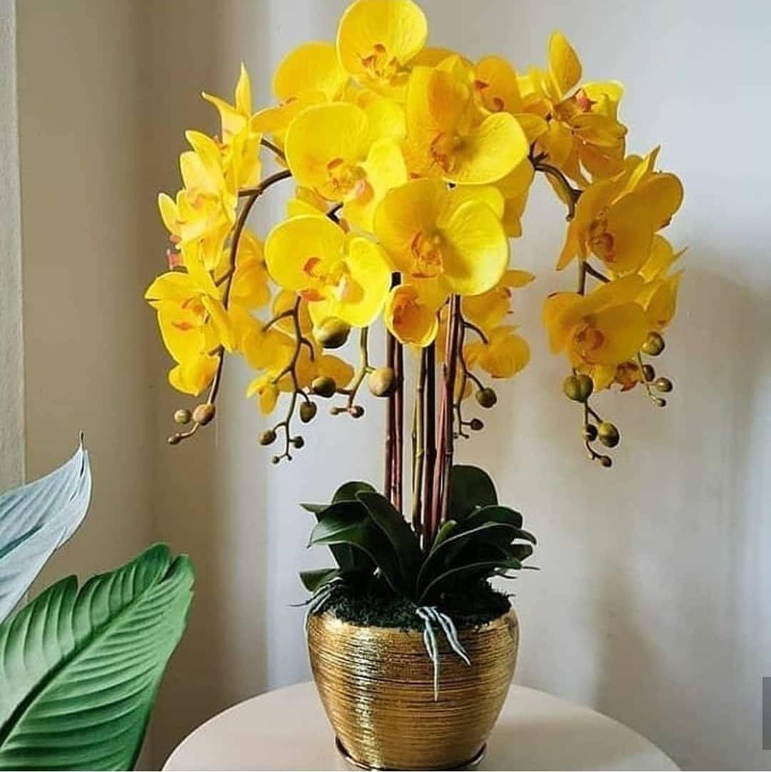 Gefallt 797 Mal 6 Kommentare Como Cuidar De Orquideas Orquideas Aqui Orchid Flower Arrangements Beautiful Flower Arrangements Orchid Arrangements