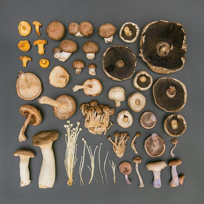 В лесу столько самых разных грибов, которые так и хочется ...