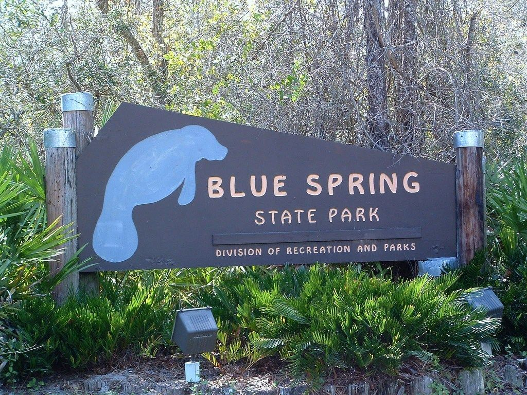 3 Places To See Manatees In Florida Blue Springs State Park Places To See Amusement Parks In Florida