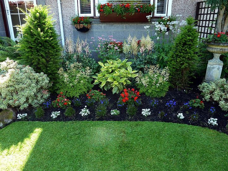 Shade Perennial Flower Bed Aruncus Aethusifolius At Either Side Of The Aucuba V Front Yard Landscaping Design Front Garden Landscape Front Yard Garden Design