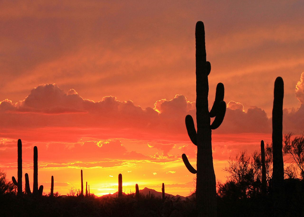 Tucson Arizona Is Home To The Nations Largest Cacti The