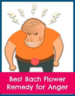Best Bach Flower Remedy for Anger   Bach flowers, Remedies ...