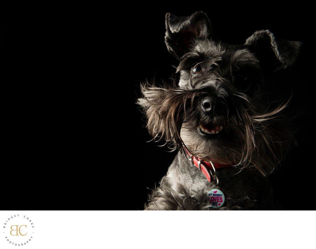 Bridget Corke Photography Top Schnitzel Dog Johannesburg Studio