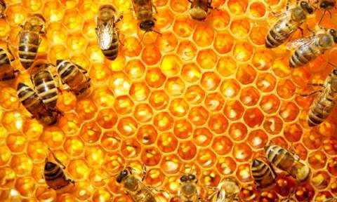House Legislation Proposed to Ban Bee Killing Pesticides...we'll see.