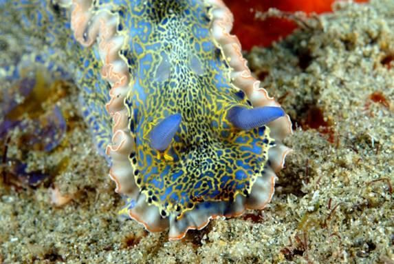Explore the underwater wonder that is Buccoo Reef during your stay at Grafton Beach Resort in Trinidad & Tobago. http://graftonbeachresorttobago.com/