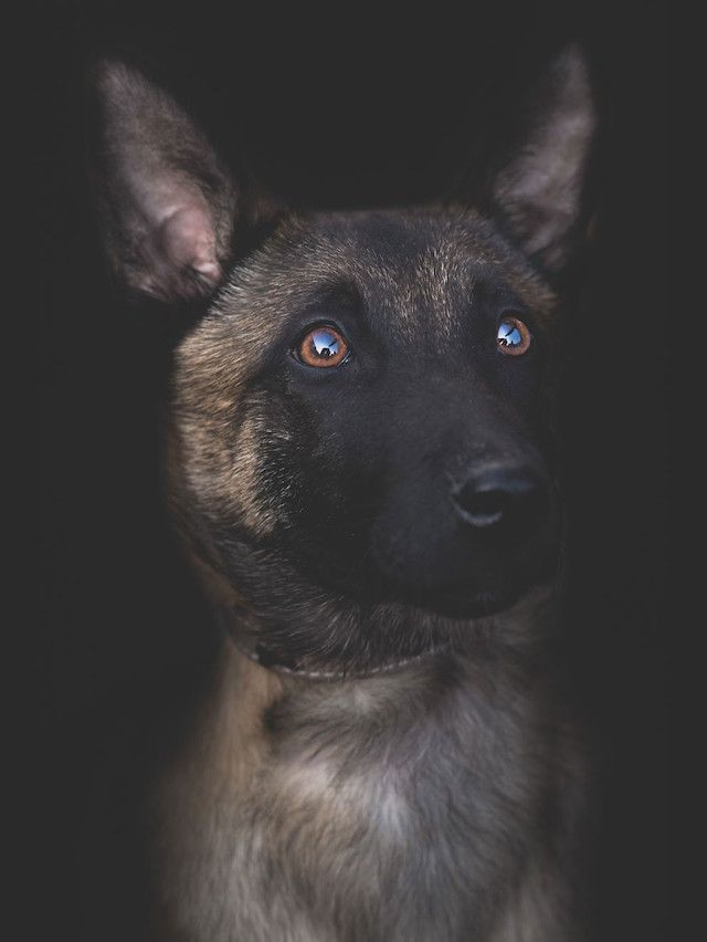 Dog Portraits By Dragos Birtoiu Dog Portraits Pet Portraits Dogs