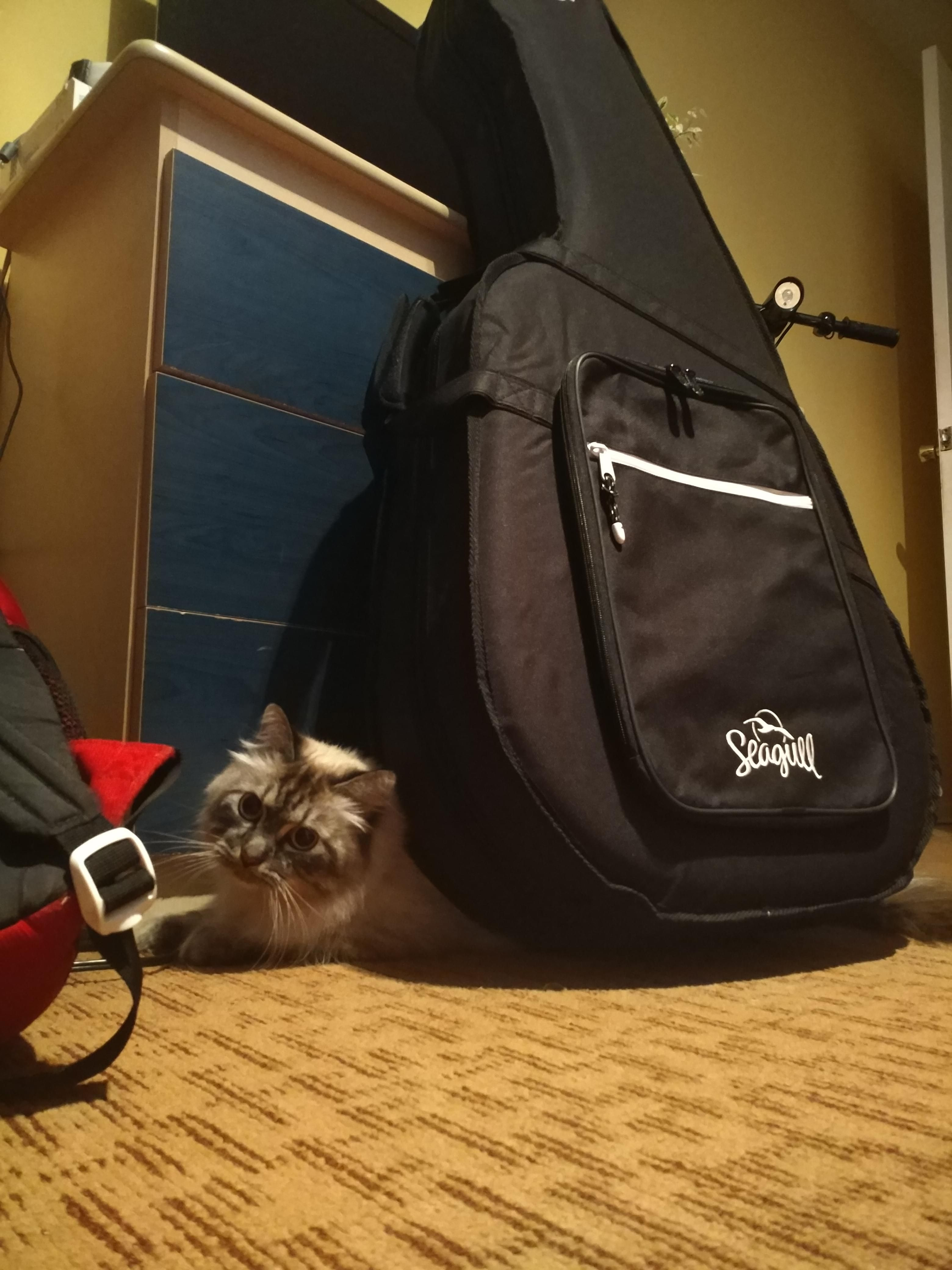 Guitar Catto Beautiful Cats Pictures Cat Lovers Cats