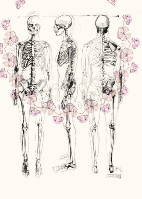 Human Skeleton Drawing Multi View Bones Pinterest Skeleton