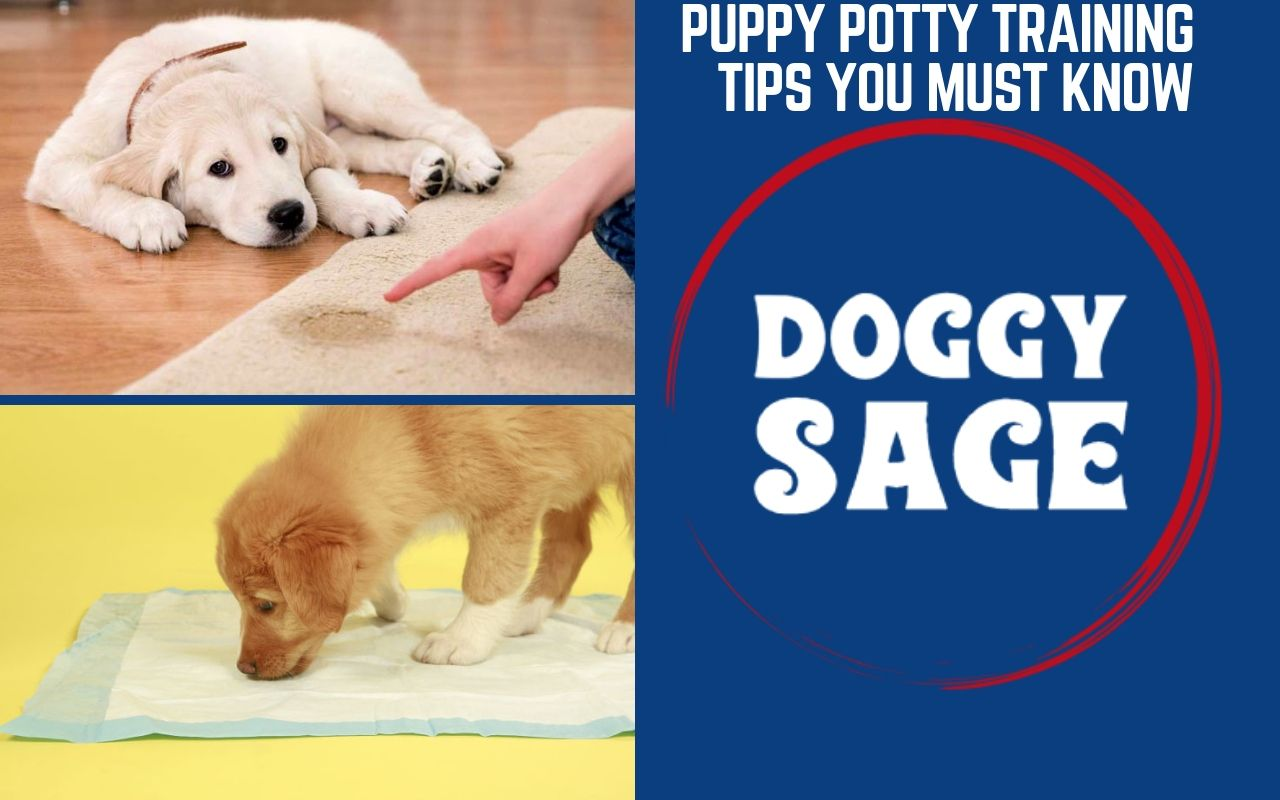 Puppy Potty Training Tips You Must Know Dog Training Puppy