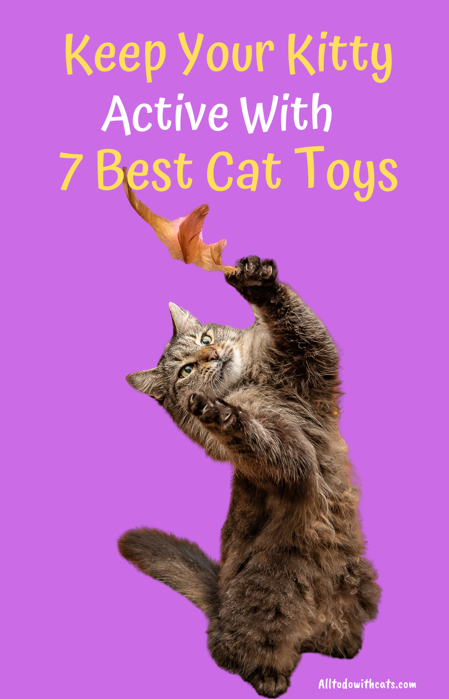7 Best Cat Toys For Indoor Cats To Keep Your Kitty Active All To Do With Cats Cat Toys Cool Cats Indoor Cat