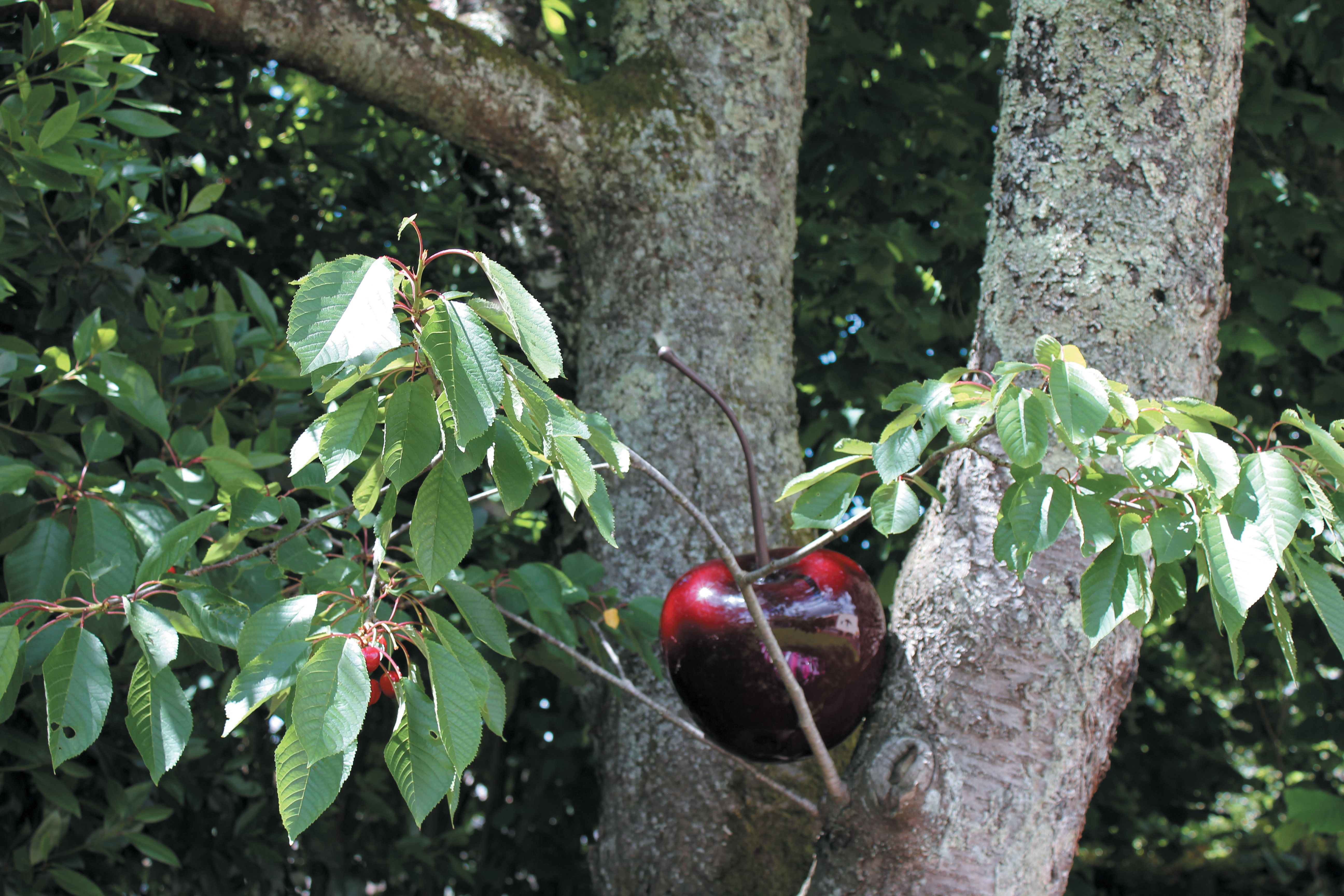 Fruits En Resine Residence Disponible Chez Home Store