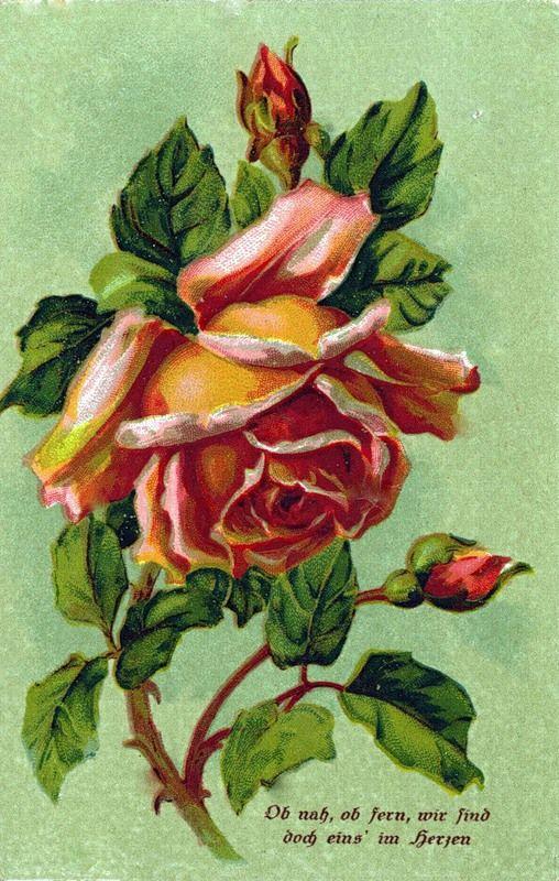 герба старинные открытки розы ванильное облако пошаговый
